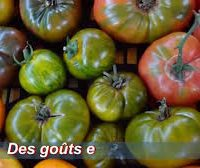 Tartelette aux tomates anciennes, lamelles de truffes d'été, siphon de Cantal et herbes fraiches*