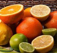 Déclinaison autour des agrumes, diplomate à l'orange, fraicheur au citron vert